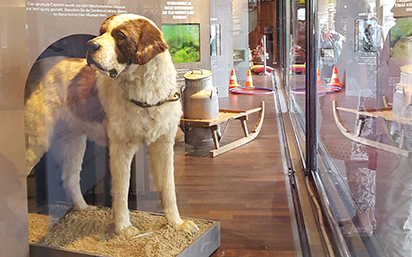 Saint Bernard exhibit